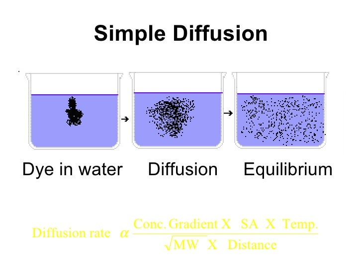 example of simple diffusion in the body