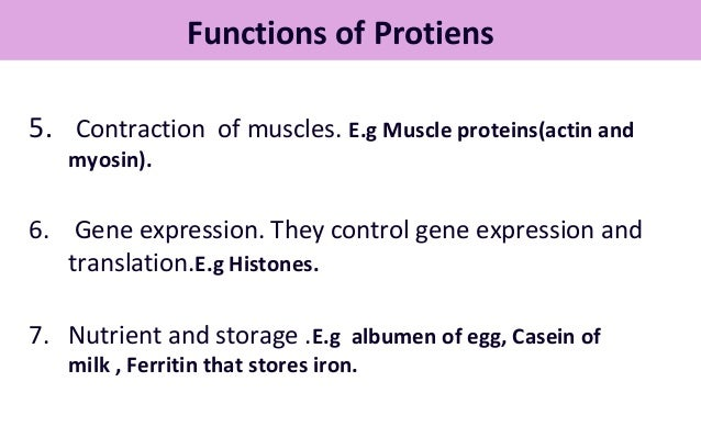 example of a contractile protein