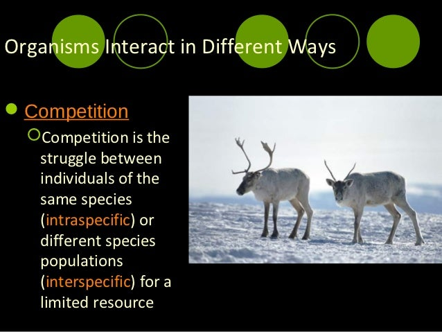 example of competition within a species