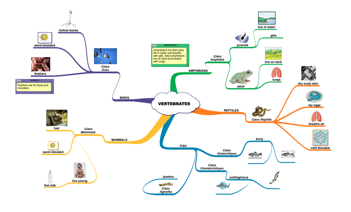 example of concept map in science