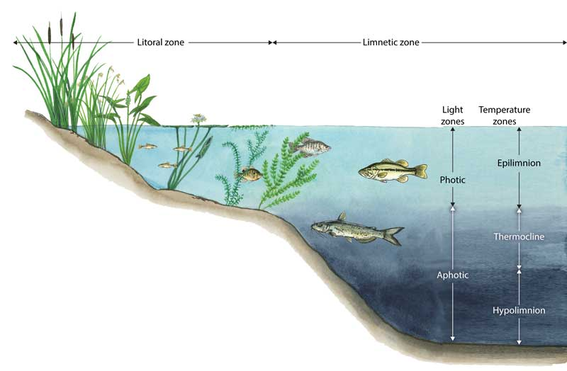 pond is an example of lentic or lotic ecosystem