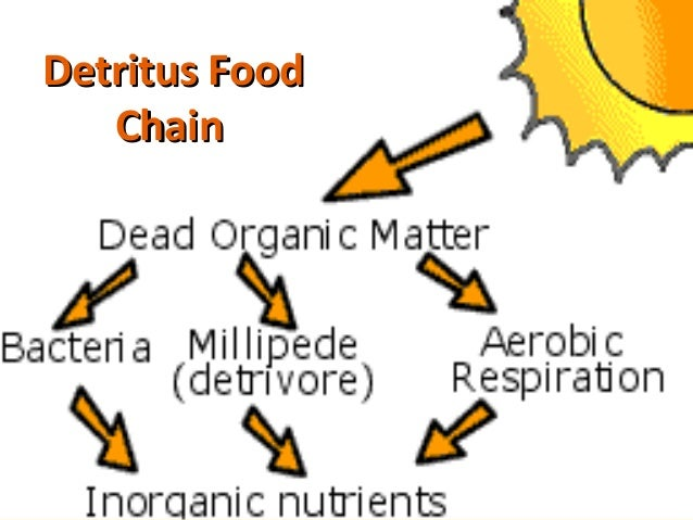 what is an example of a detritivore
