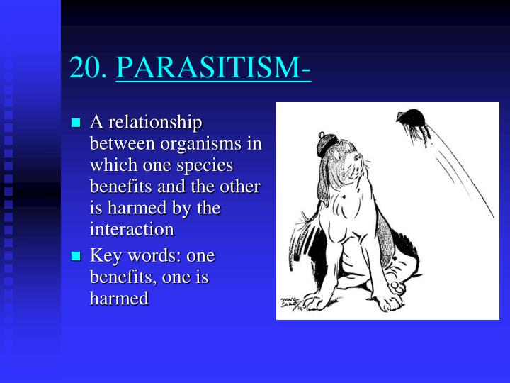 an example of parasitism relationship