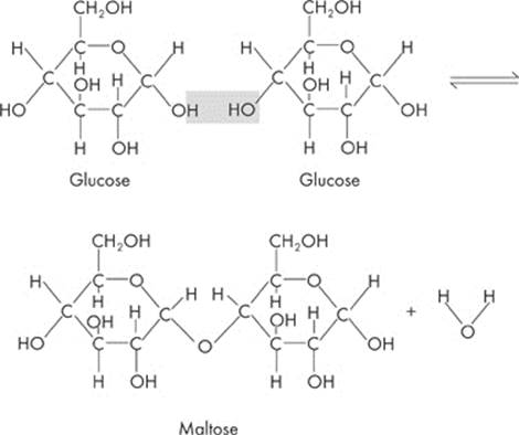 cellulose is an example of what type of molecule