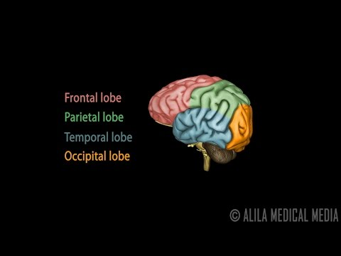 lateralization of brain function example